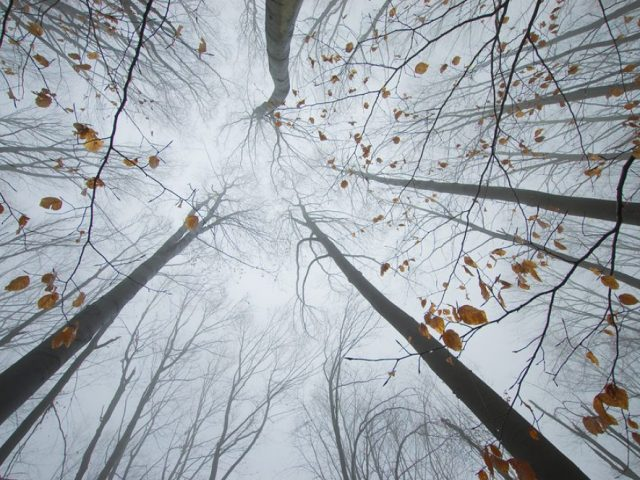 Trees reaching up in a forest in autumn